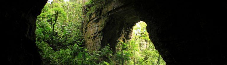 PNN Cueva de Los Guácharos