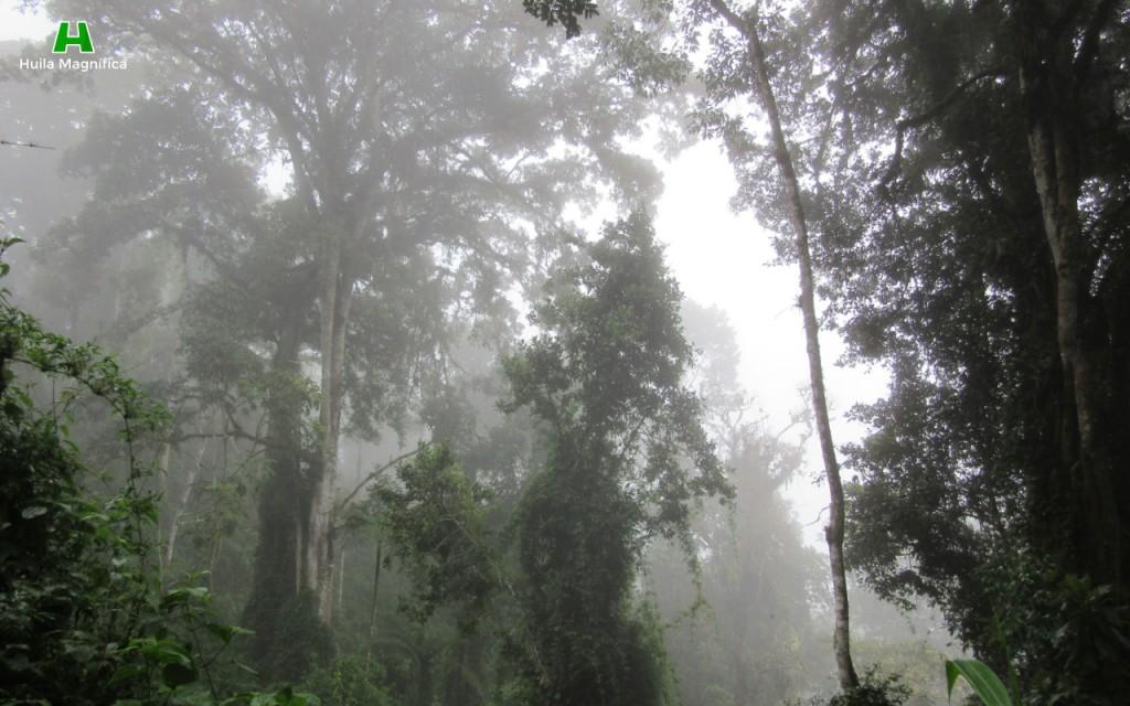 Sendero el Colibri (Bosque Denso)