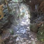 Caminando por el túnel verde