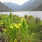 Flora cerca a la laguna