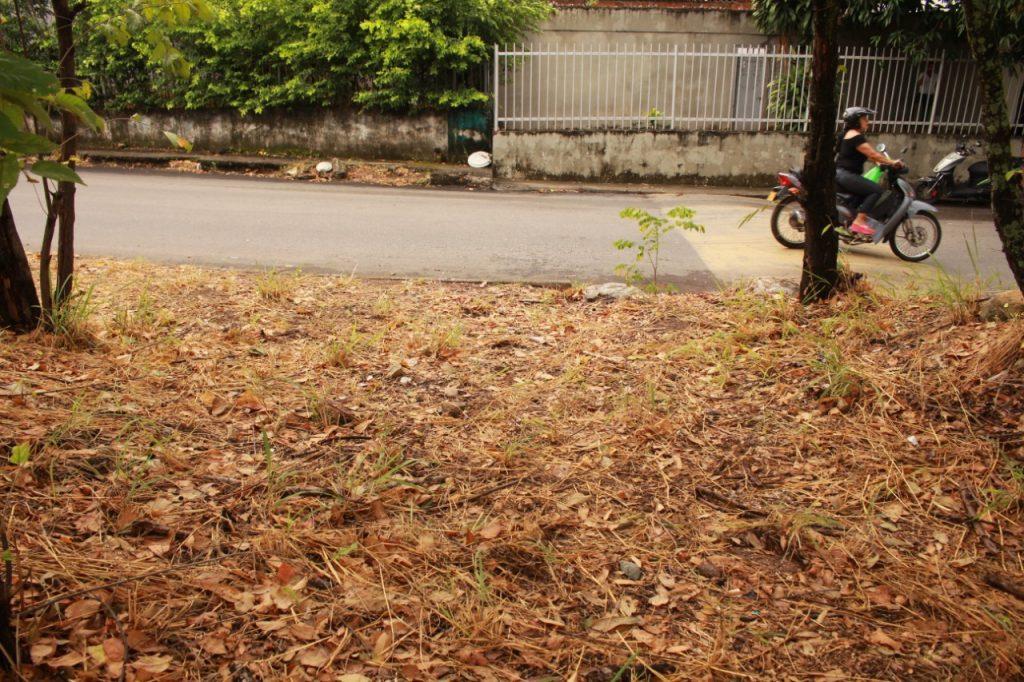 Limpieza de zonas verdes