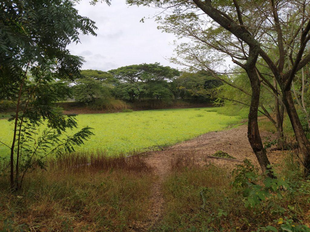 Humedal Santa Bárbara