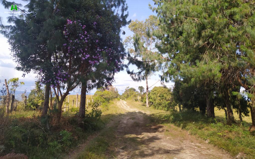 Carretera hacia la Reserva Natural Portal del Oso